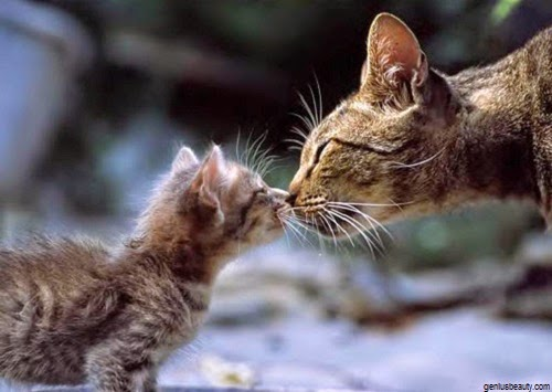 Photo Chaton avec Maman