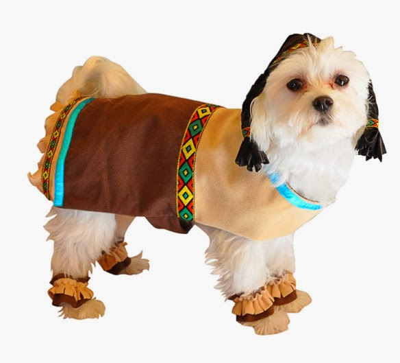 Indian Dog Costume for Thanksgiving | Baxter Boo & The Most ADORABLE DOGS Dressed in Thanksgiving Costumes! | BOLD and ...