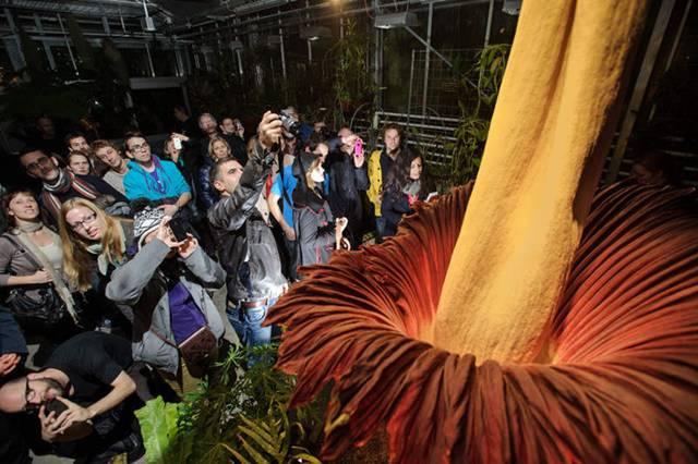 Pix Grove World 39 S Biggest Flower Blooms In Switzerland