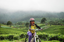 di Kemuning tea plantation