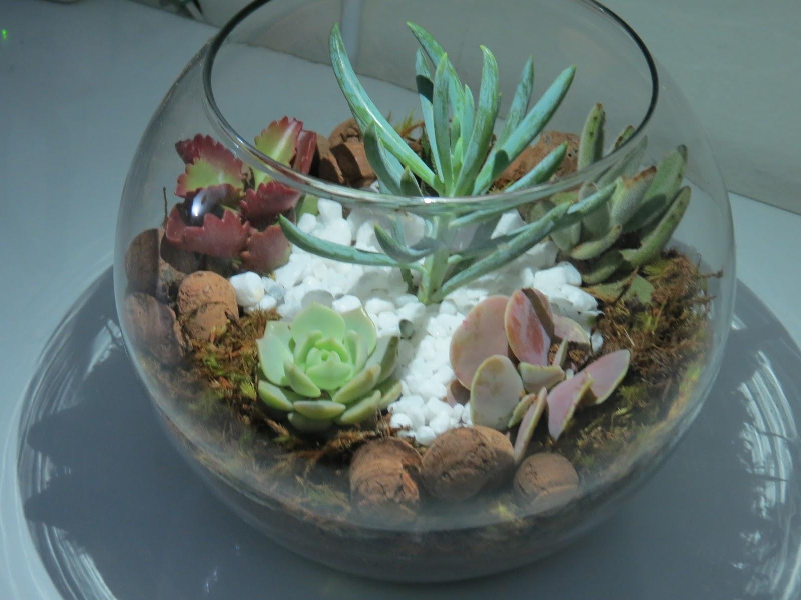 mini jardim suculentas: Plantas: Vaso Vidro Terrário Com Suculentas – Mini Jardim Aquário