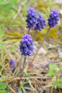 Flora de les Muntanyes de la Costa Daurada