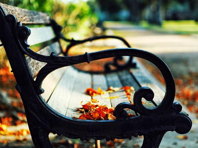 листья на скамейке