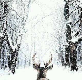 Rêne sous la neige Noel Weheartit Inspiration Décembre Lifestyle Mademoiselle latinne