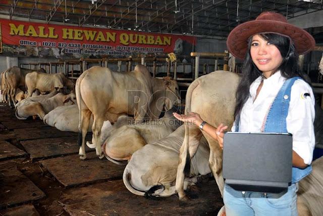 Spg Cantik Penjual Sapi Kurban [ www.BlogApaAja.com ]