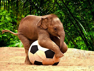 Baby Elephant Playing with a Football