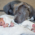 After Fearing His Wife's Pit Bull Would Harm The Baby This Man Had A Complete Change Of Heart