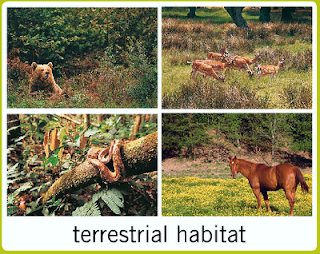 terrestrial habitat Toronto and region conservation monitors terrestrial plant and animal species in forests, wetlands and meadows across our regional watersheds.