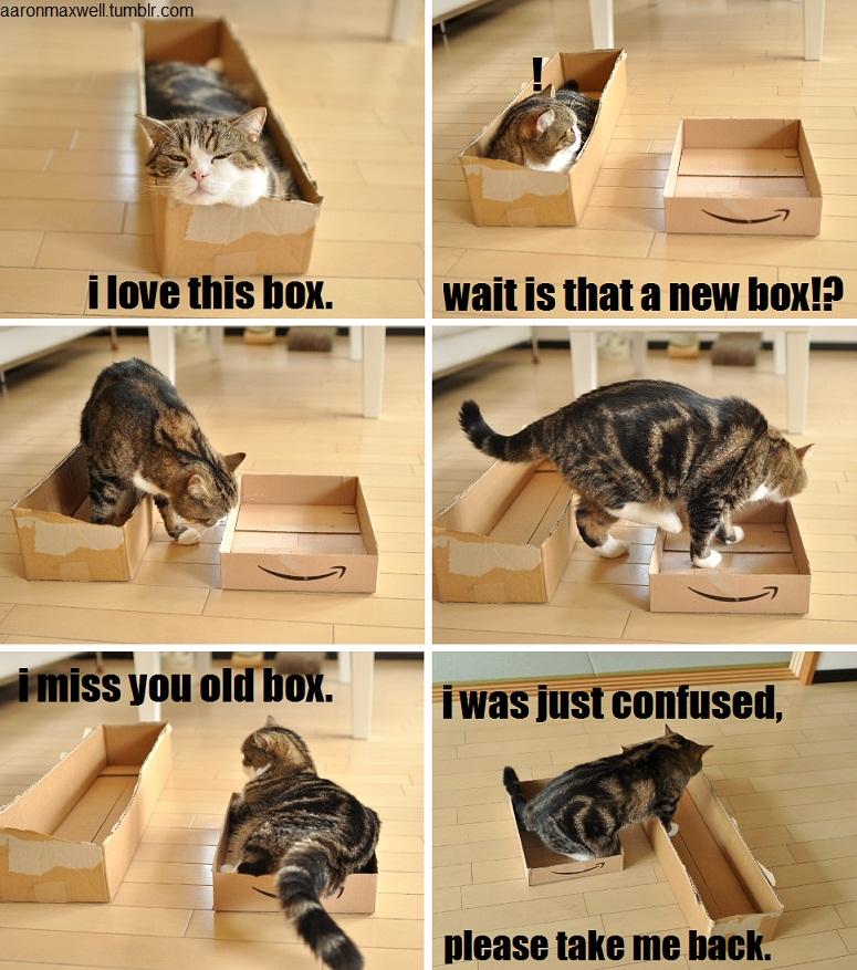 Maru and two boxes, cute maru pictures, maru the cat, maru
