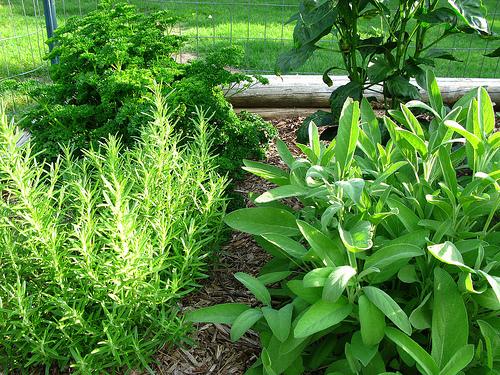 Arte y jardiner a plantas arom ticas como dise ar un jardin for Como evitar que salga hierba en el jardin