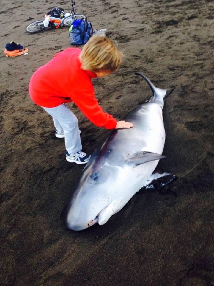 Cetáceos muertos en Canarias gracias a las prospecciones petrolíferas: Todo por la pasta