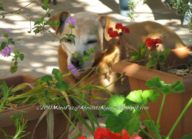 Doggy on the veranda