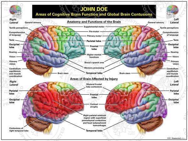 Brain Function8
