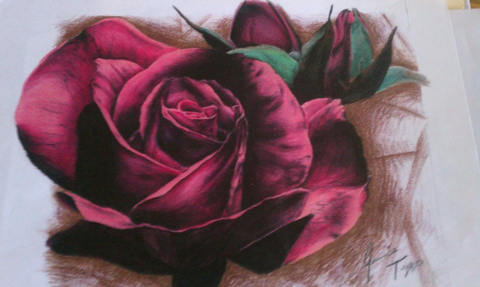 flower colour pencil sketches - photo #11