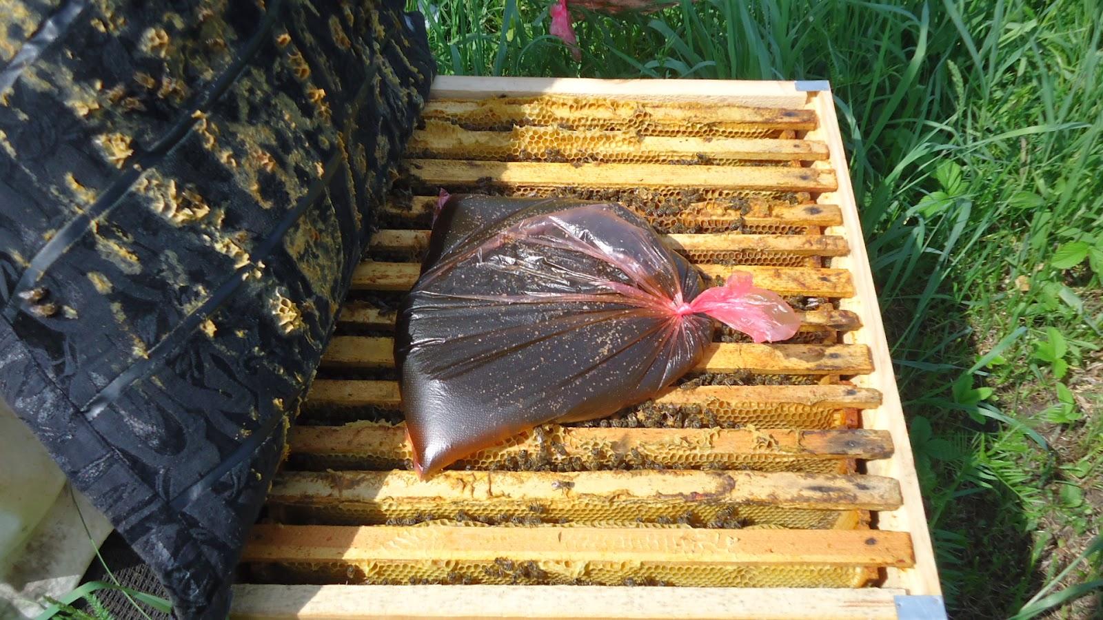 прикормка пчелами