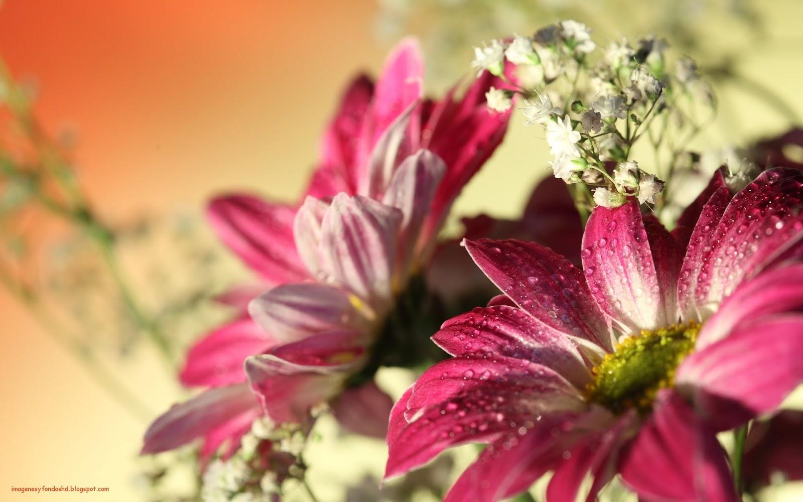 Imagenes Gratis De Flores Para Descargar