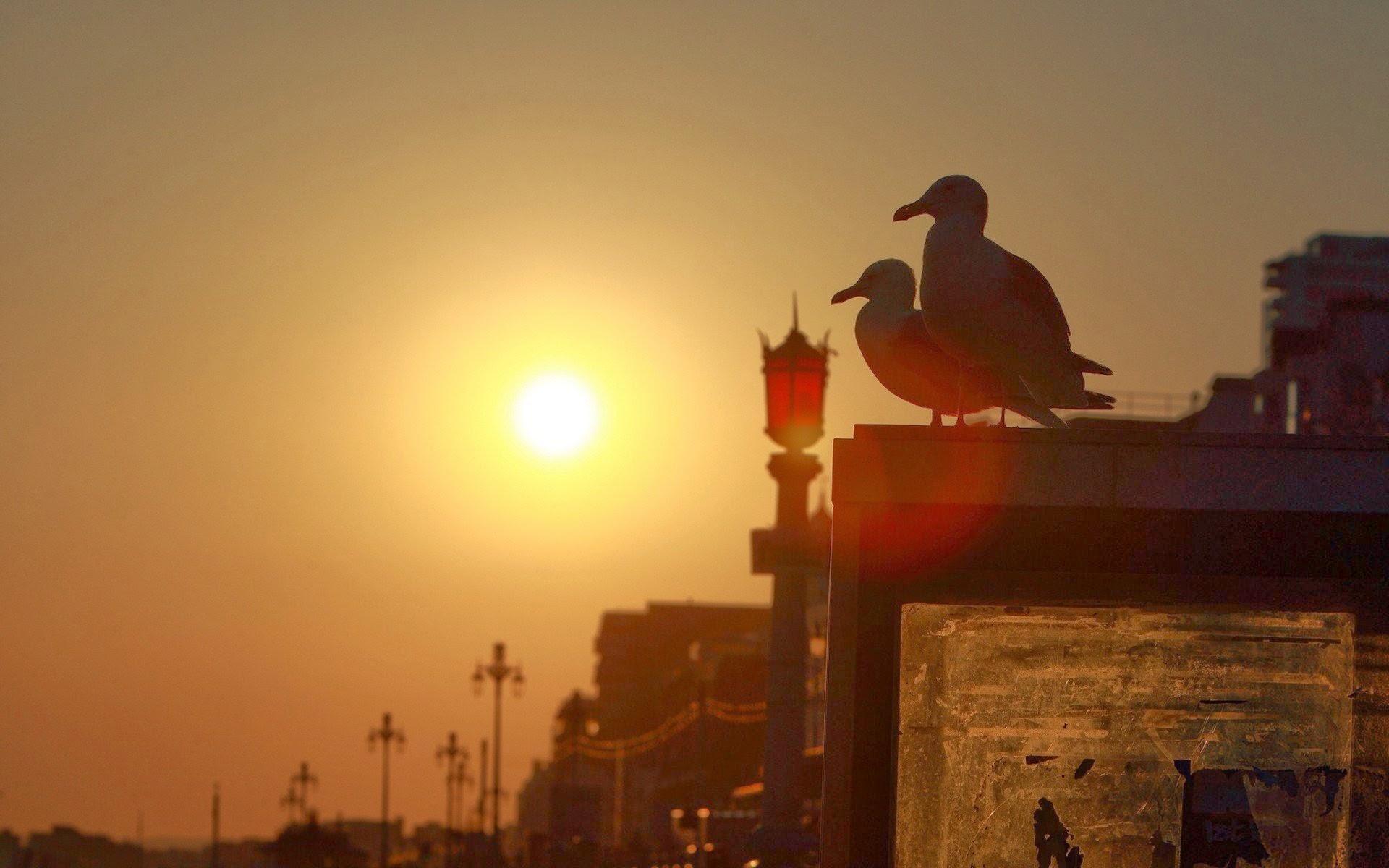 Aves en la atardeser caida del sol fondos de pantalla for Fondo del sol