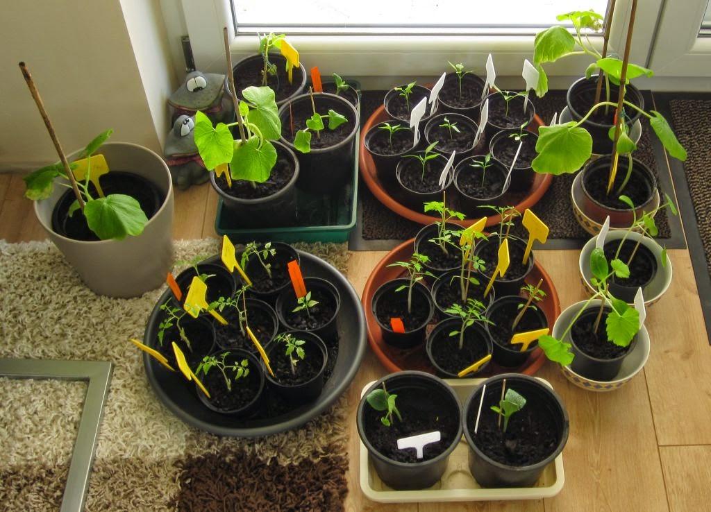 ★ sternensinn ★ garten und mehr ★: gemüse (und pflanzen) update, Garten und Bauen