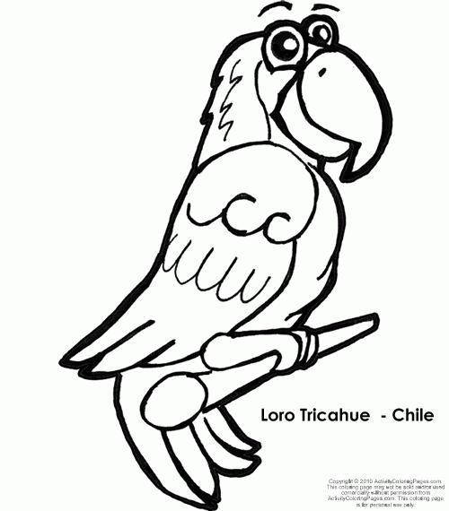 Aves chilenas colorear Cóndor, loro Ticahue y Cisne cuello negro ...
