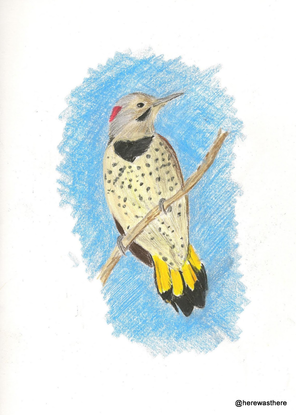 Alabama Yellowhammer - Northern Flicker
