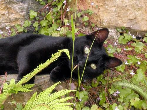 mi gata negra roma, tiene a raya a los pajaros.