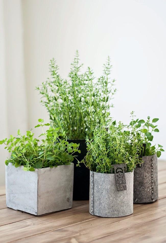 ikea växter inomhus