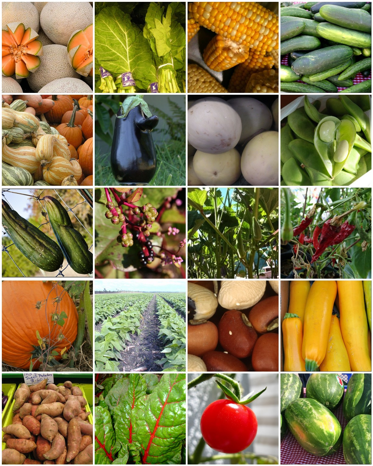 Texifornia veggies to plant in texas in april - Vegetable garden what to plant in april ...