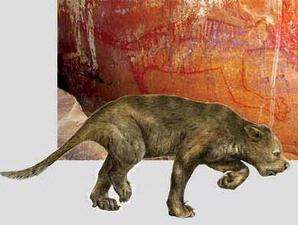 Singa Berkantung Pernah Hidup di Australia