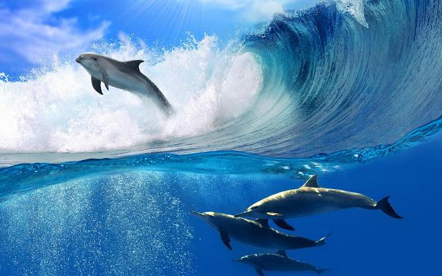 Imágenes Delfines en las Olas - Fotos de Delfines