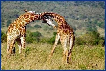 lustige bilder von giraffen - Lustige Cartoons Cartoon Art Jokes & Comics