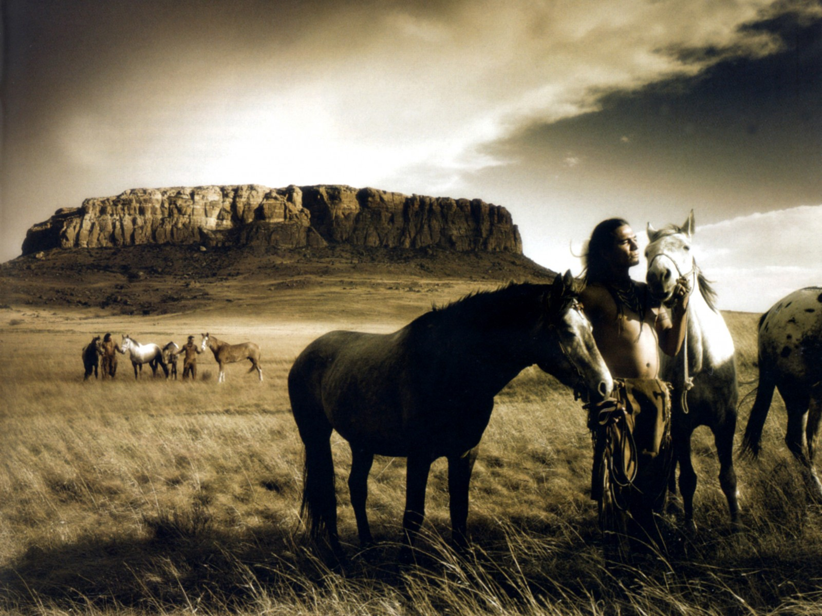 wild horse hd wallpapers - photo #4