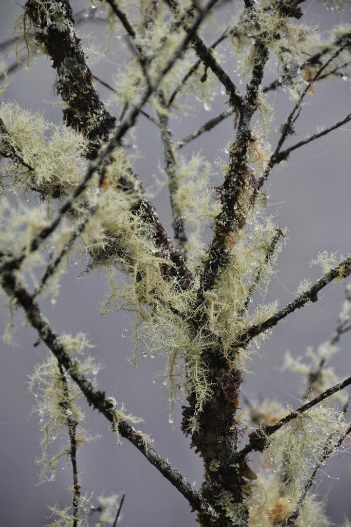 Waynapicchu tree