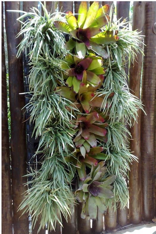 jardim vertical xaxim: 25,00 cada e 14 liriopes, a R$ 10,00 cada, em placas de xaxim
