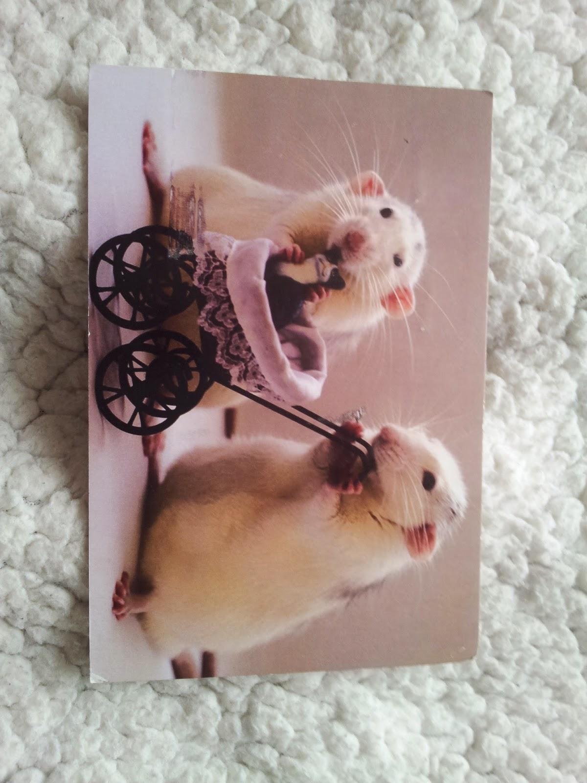 carte-postale-postcrossing-cartes-rats