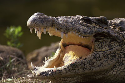 http://1.bp.blogspot.com/-7Nk8sFTCbgc/TV-Z0SCEwsI/AAAAAAAAA34/IQOX0oS8Zc4/s1600/crocodileo.jpg
