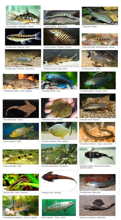 Listado de Especies