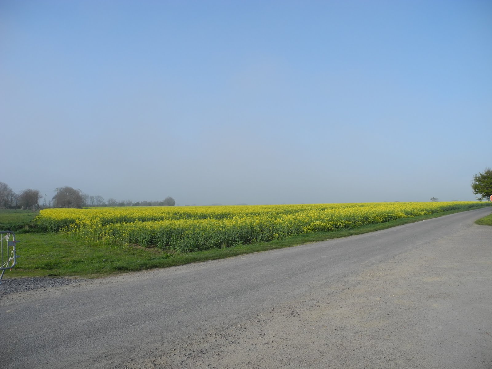 Just Allez On The Way To Normandy What Are Those Yellow Flowers