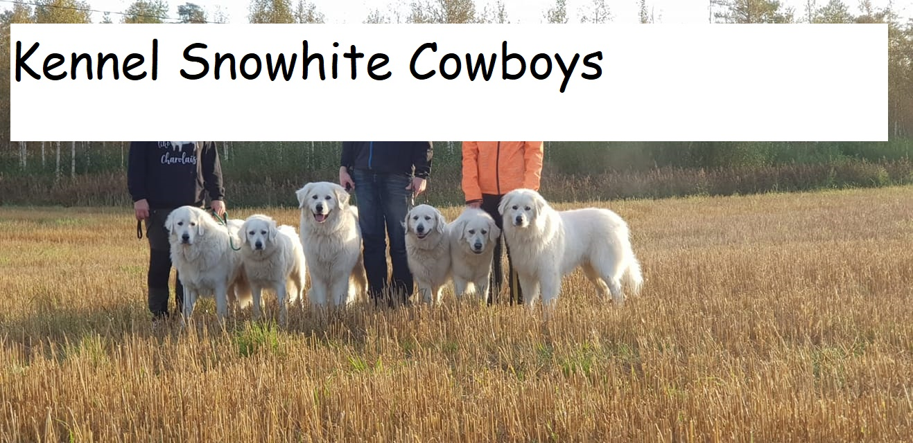 Kennel Snowhite Cowboys