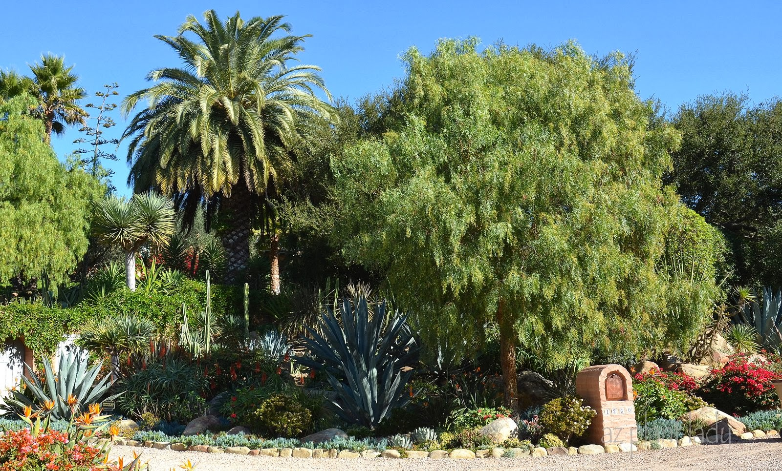 Drought tolerant landscapes colorful or boring for Drought tolerant trees