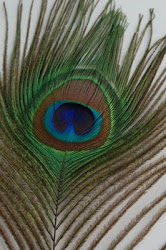Get The Best Prices On Wholesale Feathers