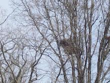 A Hawk's Nest