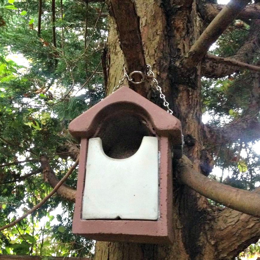 siting a robin nest box 1