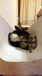 U字溝で寝るうさぎ、ミニレッキス