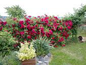 virágos udvarom
