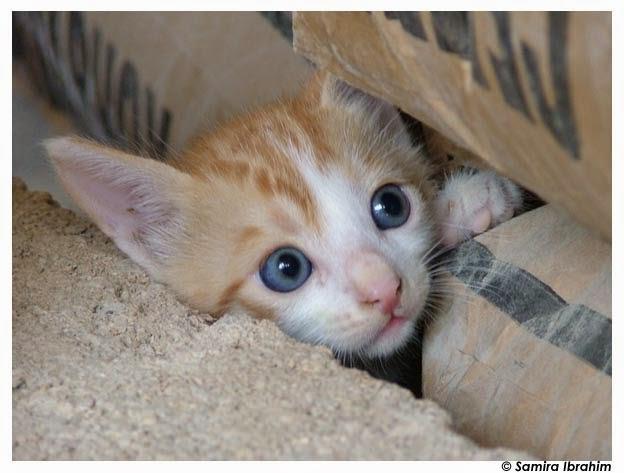 10 Fakta Unik Tentang Kucing