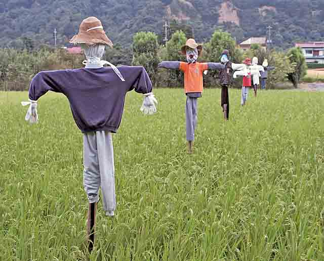 52 days to explore: Create a scarecrow for your garden