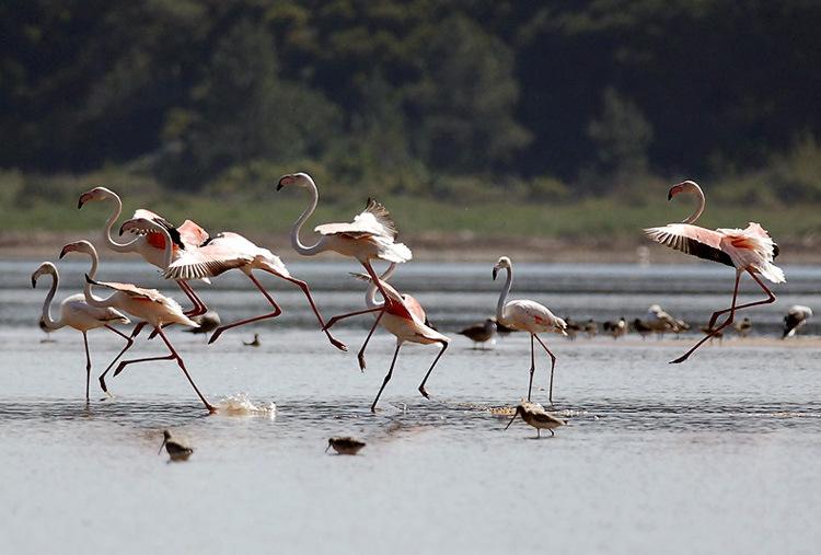 birdwatching and walking activities