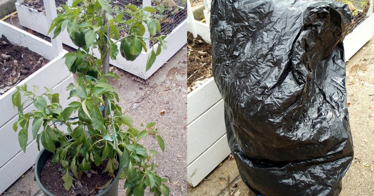 Comment prot ger les plantes de jardin du froid comment fait - Comment congeler les courgettes du jardin ...