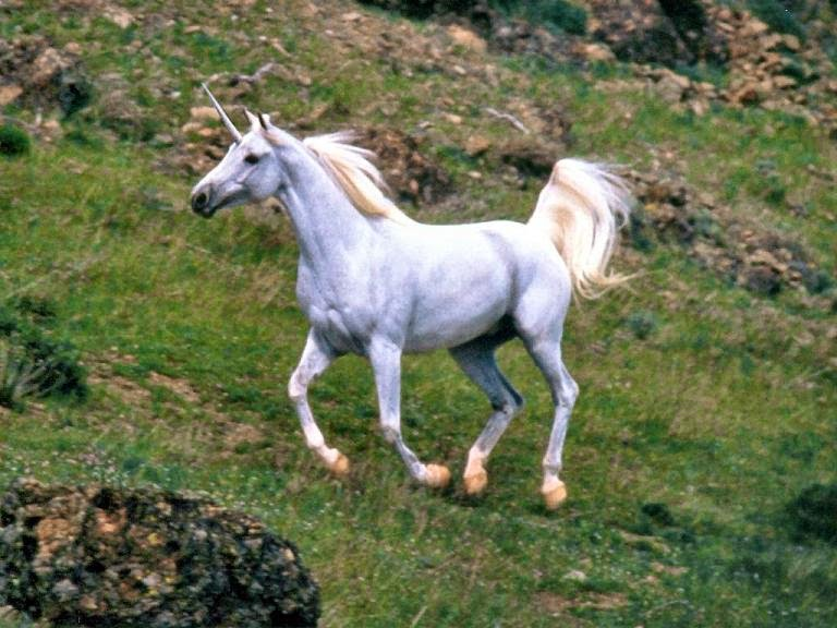 unicorn in the bible kjv
