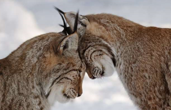 animal in love pictures
